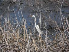 Crane at Upper Klamath Lake NWR