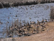 Ducks at Upper Klamath Lake NWR