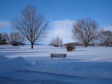 Snow at Moore Park